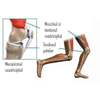 boală cronică a articulațiilor și ligamentelor)